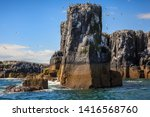 The pinnacles and nesting birds staple island farne islands off seahouses northumberland uk
