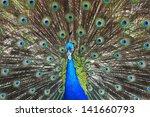 Beautiful Green Peafowl  Male