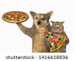 Stock photo the dog and cat eat pizza together white background isolated 1416618836