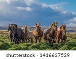 Brown Horses In An Icelandic ...