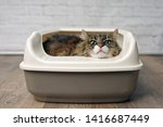 Funny Tabby Cat Sitting In A...