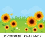 sunflower meadow in the sunny... | Shutterstock .eps vector #1416742343