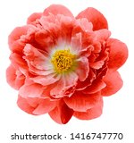red peony flower isolated on a... | Shutterstock . vector #1416747770