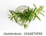 Small Rosemary Plant In A Glas...