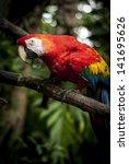 curious macaw | Shutterstock . vector #141695626