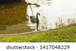 White Swan  Big Bird  Wildlife  ...
