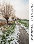Small photo of Endless-looking bicycle and hiking trail in winter. Along the path is a row of pollard willows. The thaw has begun