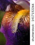 water droplets on an iris...   Shutterstock . vector #1417152266