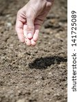 closeup of female hand sowing. | Shutterstock . vector #141725089