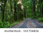 Forest Road Northern California Redwood National Park. North California Nature Photography Collection. - stock photo