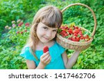 the child collects strawberries ... | Shutterstock . vector #1417462706