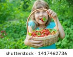 the child collects strawberries ... | Shutterstock . vector #1417462736