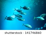 School Of Fishes Underwater....