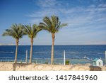 palm trees and other plants in... | Shutterstock . vector #1417841960