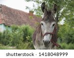 Cute donkey at country side...