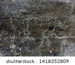 Small photo of Cobweb or spiderweb on old wooden texture background wall in ancient house. Old grunge spiderweb weathered dusty wall & cobweb. Spiderweb spooky, scary, horror wooden background. Cobweb or spider web