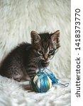 domestic kitten on white shaggy ... | Shutterstock . vector #1418373770