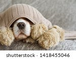 sick  playful  or scared... | Shutterstock . vector #1418455046
