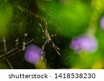 The Underside Of A Golden Orb...