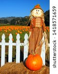 A Scarecrow And Pumpkin Stand...
