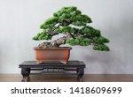 Old Japanese White Pine Bonsai...