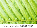 the structure of nature fern... | Shutterstock . vector #141872638