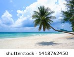 Coconut Tree Or Palm Tree At...