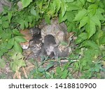Stock photo stray cat with her kittens in nest 1418810900