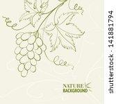 grape wine card. vector... | Shutterstock .eps vector #141881794
