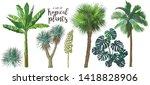 A Set Of Tropical Bananas Palm...