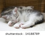 Stock photo baby cats 14188789