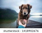 Dog Gives Human Paw. Friendshi...