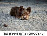 the little shaggy red dog | Shutterstock . vector #1418903576