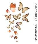 Flock Of Flying Butterflies...