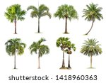 coconut and palm trees isolated ... | Shutterstock . vector #1418960363