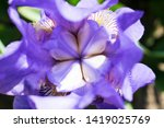 colorful violet iris flower... | Shutterstock . vector #1419025769