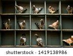 speed racing pigeon perching ... | Shutterstock . vector #1419138986