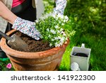 A Mature Woman Planting Flower...