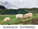 sheep and ram in a pasture... | Shutterstock . vector #1419389603