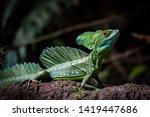 Costa Rica Wildlife  Male...