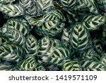 beautiful leaves plants... | Shutterstock . vector #1419571109