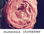 Stock photo background fold flower macro red flower abstract aroma background gentle summer rose 1419585989