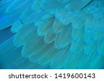 macaw wings  blue and gold...   Shutterstock . vector #1419600143