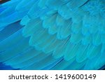 macaw wings  blue and gold...   Shutterstock . vector #1419600149