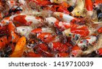 group of colorful fancy carp... | Shutterstock . vector #1419710039