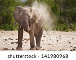 Isolated Elephant Having A Dus...