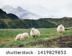 sheep and ram in a pasture... | Shutterstock . vector #1419829853