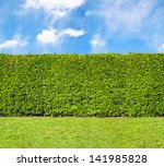Tall Hedge  Endless Seamless...