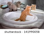 Little Kittens Bathing In The...