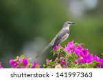Northern Mockingbird  State...